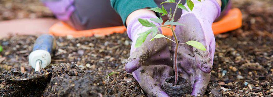 10 tips voor het tuinonderhoud in het voorjaar